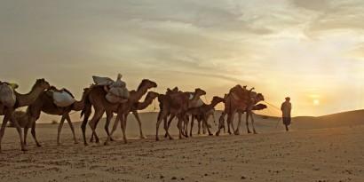 o-camels-bible-facebook